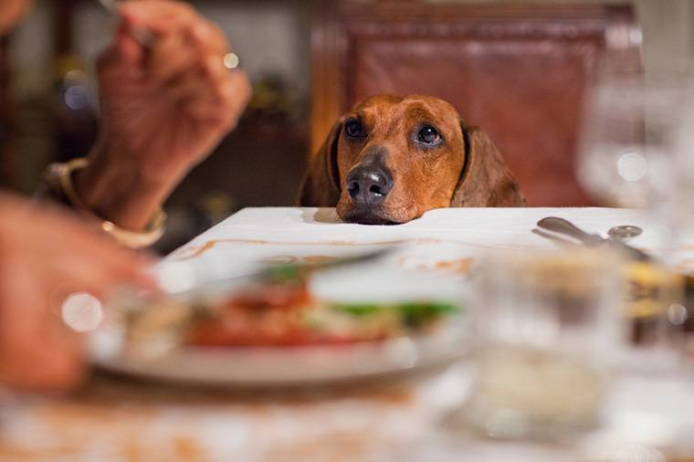 Bring the Right and Healthy Changes in Your Dog's Diet