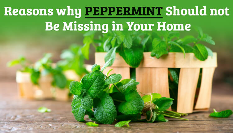 Reasons why Peppermint Should not be Missing in Your Home