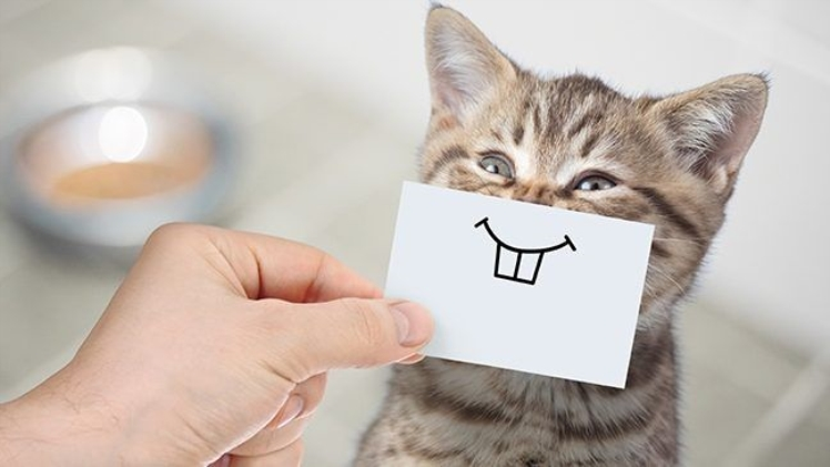 Track Your Pet Expenses