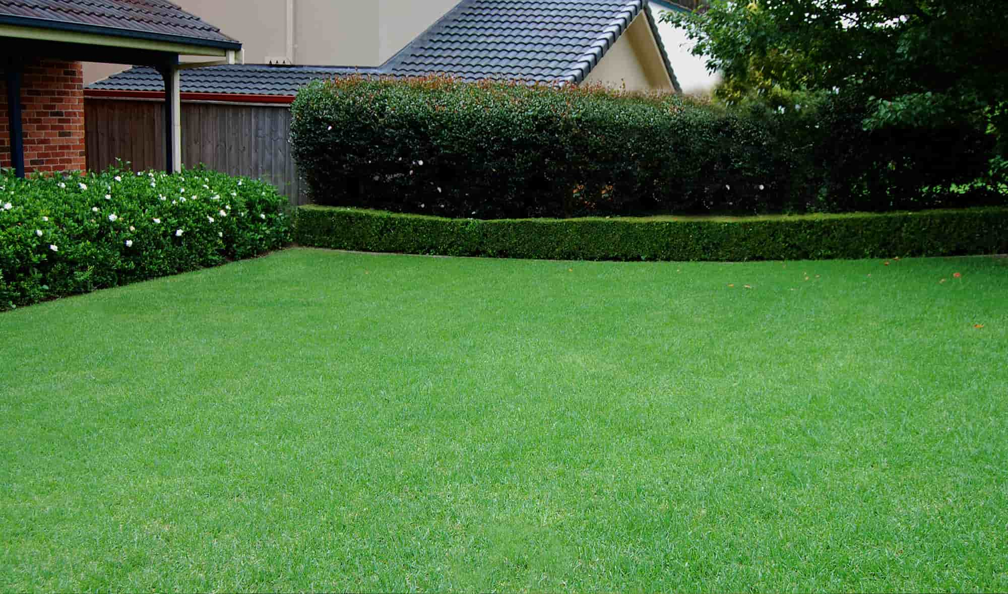 How to Find the Best Online Tips For Lawn Care? – Amir Articles