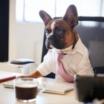 10 jobs for dogs in human territory