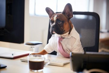 8 jobs for dogs in human territory