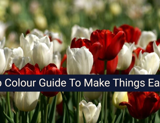 Tulip Colour Guide To Make Things Easier For You
