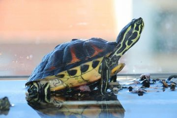 6 Things To Know about Tortoises before You Adopt One