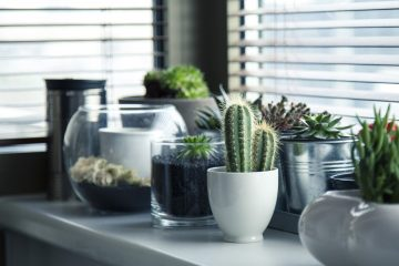 Indoor Succulent Care: A Guide for New Plant Parents