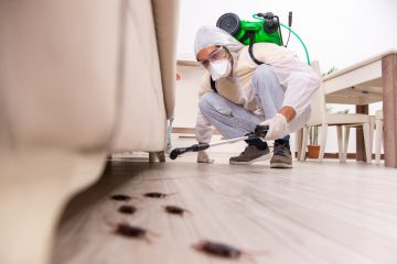 The Common Household Pests Explained