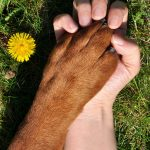 Lyme Disease in Dogs - How to Keep Your Dog Safe From the Deadly Paste